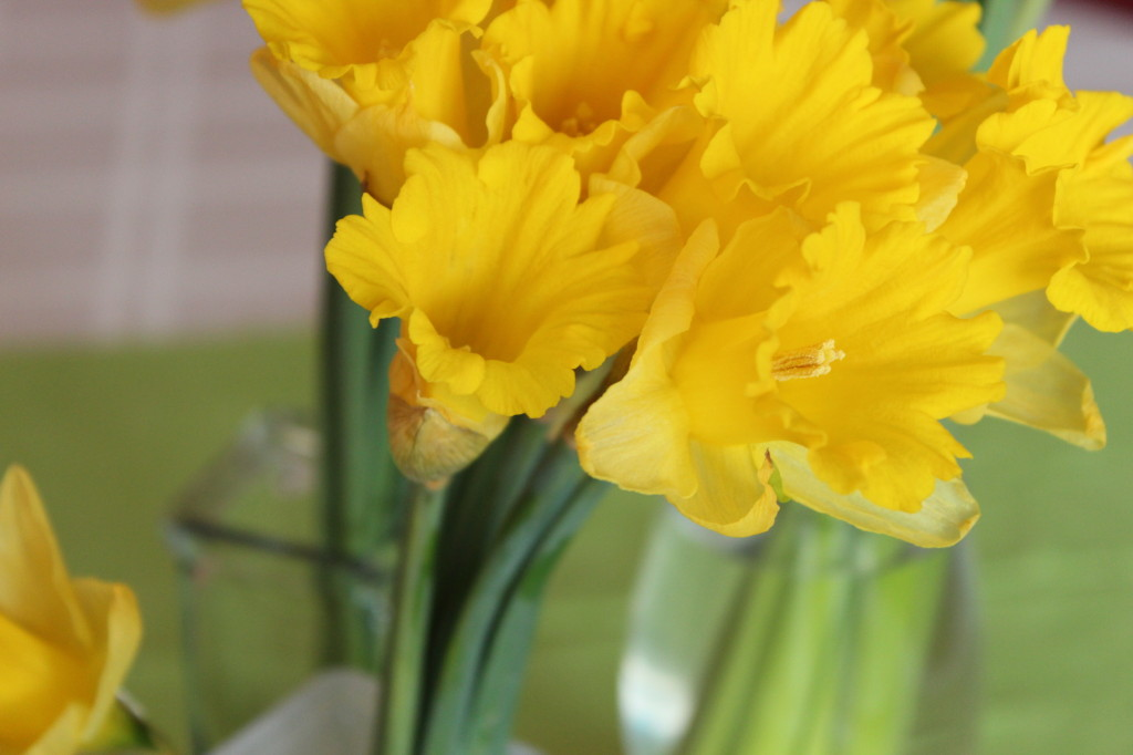 Daffodils by Every Day is an Occasion